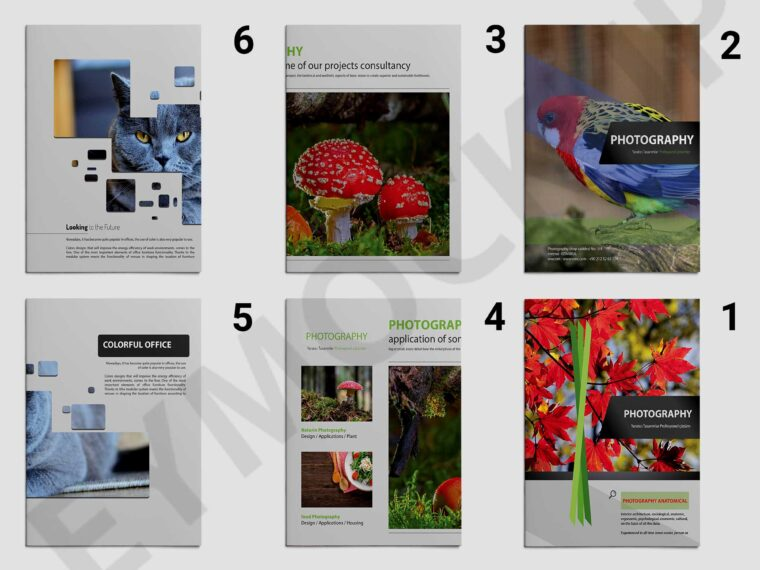 Zoo Photography Brochure Template