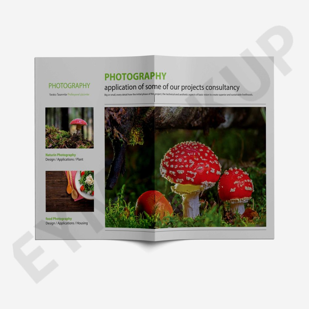 Zoo Photography Brochure